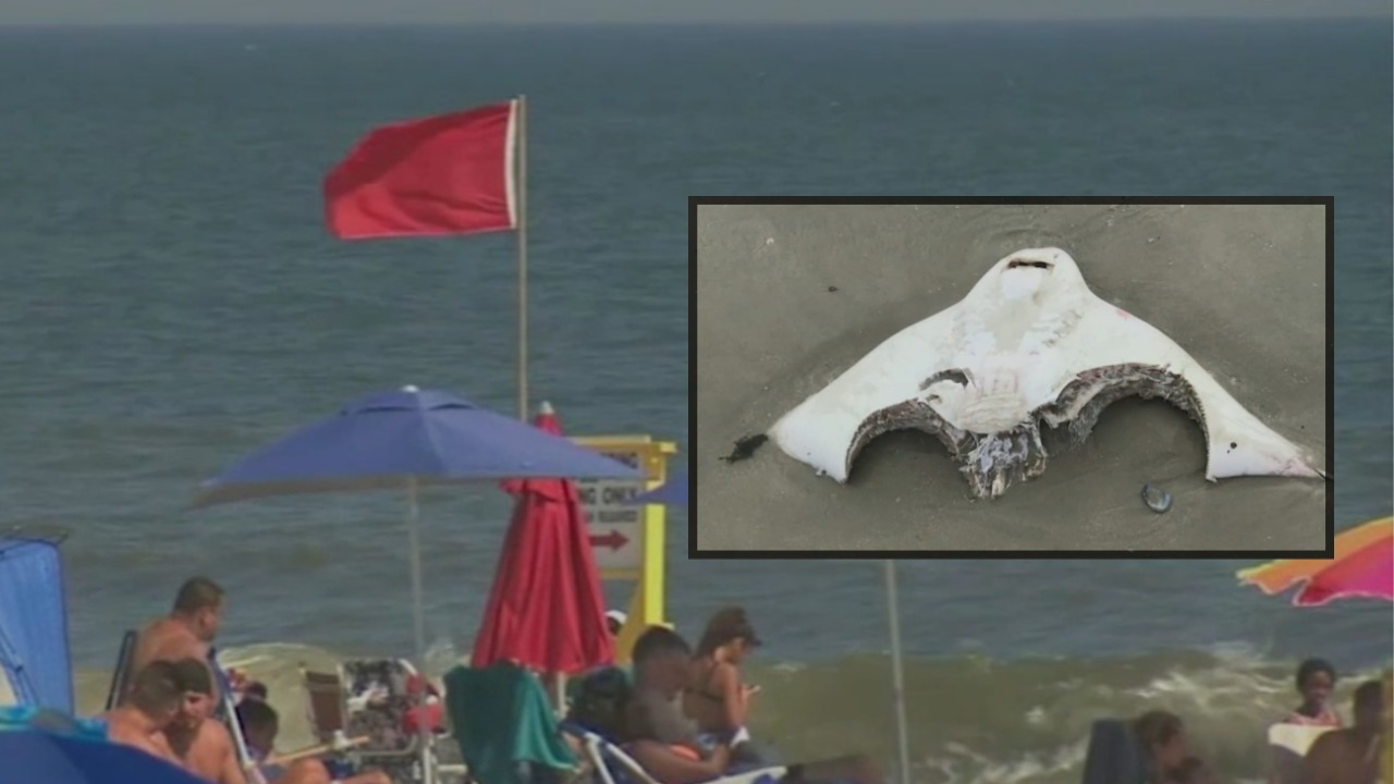 No swimming at some Long Island beaches due to shark sightings