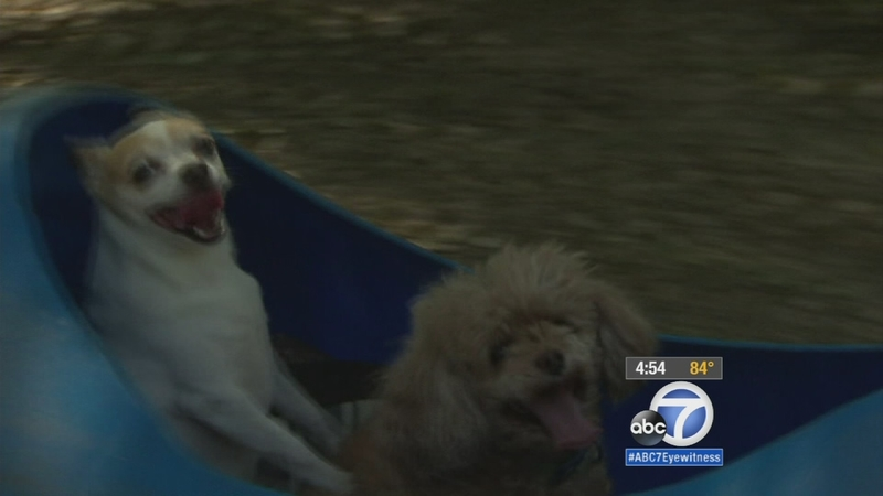 Texas man builds 'doggie train' for rescued dogs