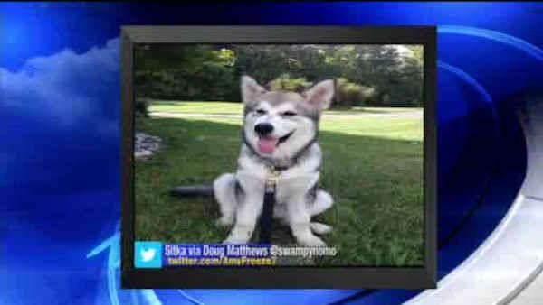"""<div class=""""meta image-caption""""><div class=""""origin-logo origin-image none""""><span>none</span></div><span class=""""caption-text"""">Big Dog Sunday: Sept. 27, 2015</span></div>"""