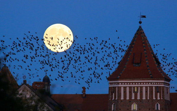 """<div class=""""meta image-caption""""><div class=""""origin-logo origin-image none""""><span>none</span></div><span class=""""caption-text"""">The supermoon is seen over Mir, Belarus, overnight on Sept. 27, the night of a lunar eclipse. (Photo/AP)</span></div>"""