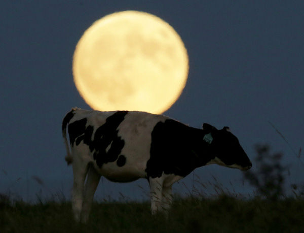 """<div class=""""meta image-caption""""><div class=""""origin-logo origin-image none""""><span>none</span></div><span class=""""caption-text"""">The supermoon is seen over Lecompton, Kan., overnight on Sept. 27, the night of a lunar eclipse. (Photo/AP)</span></div>"""