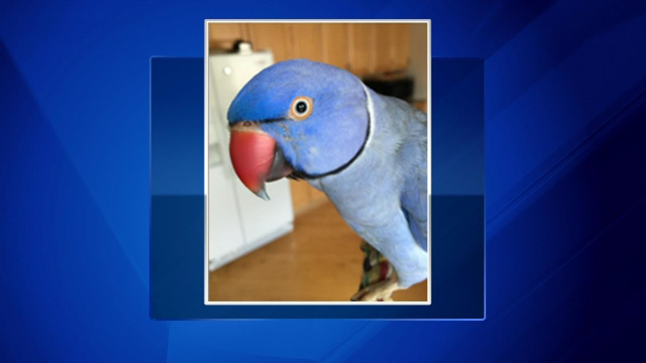 chelsea parrot