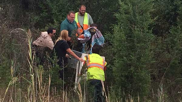 An Illinois Department of Transportation crew protected an injured bald eagle from traffic along I-55.
