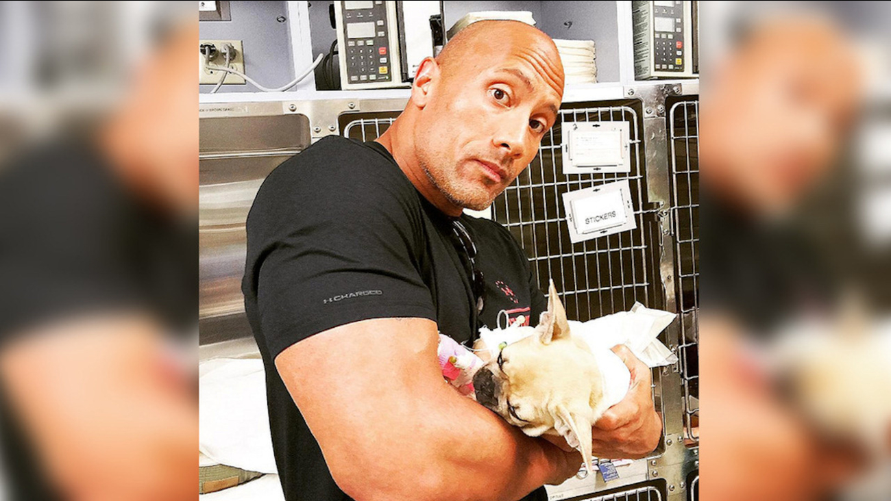 The Rock Posts Moving Message After Dog Dies From Eating