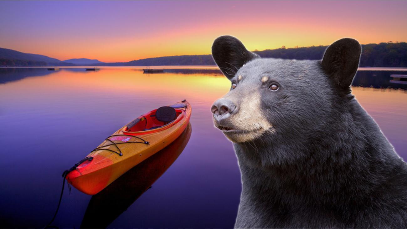 Bear and a kayak