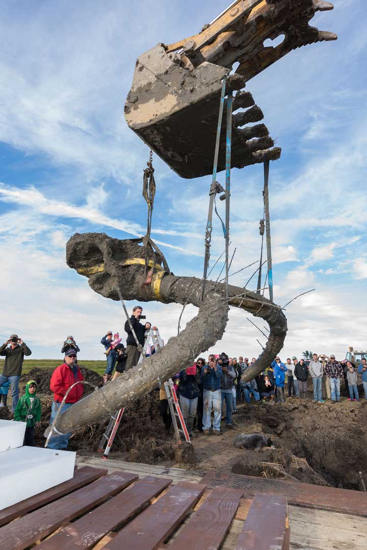 "<div class=""meta image-caption""><div class=""origin-logo origin-image none""><span>none</span></div><span class=""caption-text"">Paleontology Ph.D. candidate John Fronimos watches as the mammoth skull and tusks are hoisted from the excavation pit. (Daryl Marshke, Michigan Photography.)</span></div>"