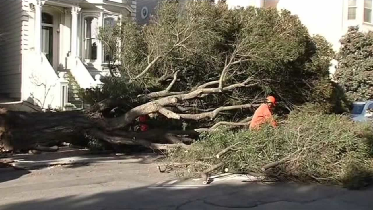 High winds struck the Bay Area, with trees toppling in San Francisco on Saturday, October 3, 2015.