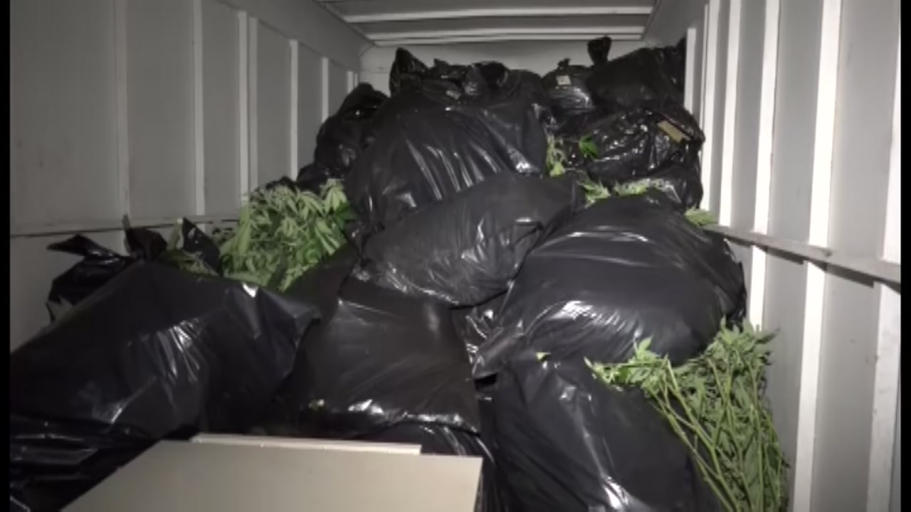 Pot bust in Montgomery County