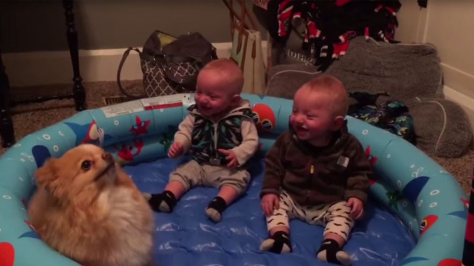 Too Cute Twin Babies Can T Stop Laughing At Their Pomeranian Dog Abc7 New York