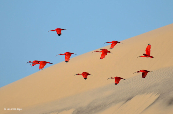 """<div class=""""meta image-caption""""><div class=""""origin-logo origin-image none""""><span>none</span></div><span class=""""caption-text"""">Jonathan Jagot, 15, of France, won the 15-17 age category with this photo, """"Flight of the scarlet ibis."""" (Jonathan Jagot)</span></div>"""