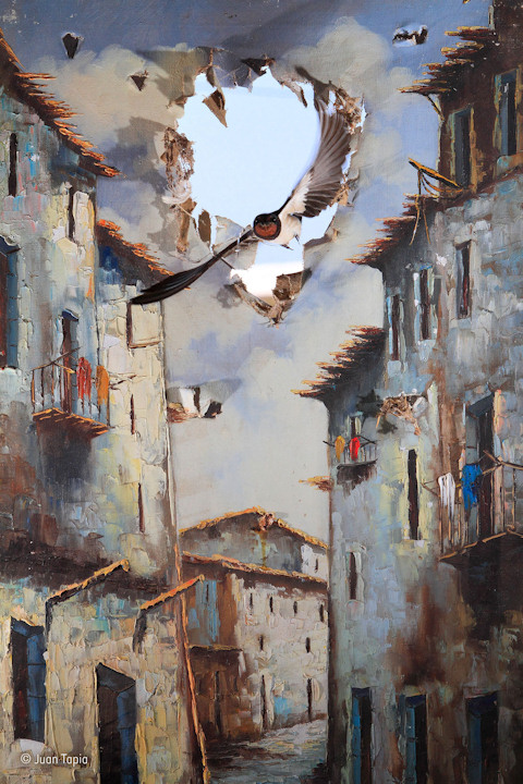 """<div class=""""meta image-caption""""><div class=""""origin-logo origin-image none""""><span>none</span></div><span class=""""caption-text"""">Juan Tapia of Spain won the Impressions category with his photo ''Life comes to art'' of barn swallows. (Juan Tapia)</span></div>"""