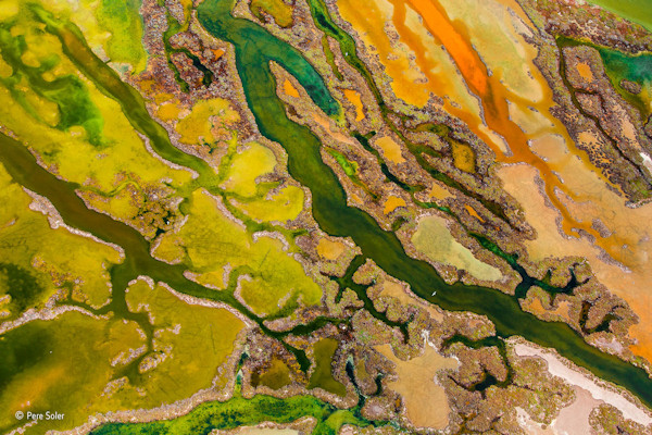 """<div class=""""meta image-caption""""><div class=""""origin-logo origin-image none""""><span>none</span></div><span class=""""caption-text"""">Pere Soler of Spain won the From The Sky category for his photo ''The art of algae.'' (Pere Soler)</span></div>"""