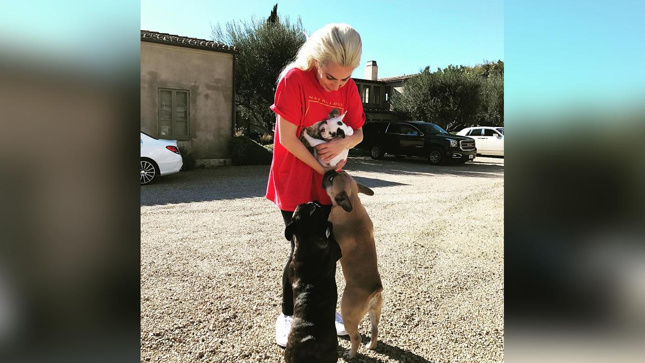 Lady Gaga's dogs stolen in Hollywood; man walking French bulldogs shot