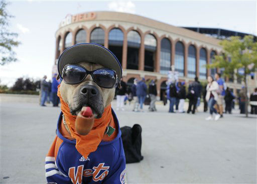 "<div class=""meta image-caption""><div class=""origin-logo origin-image none""><span>none</span></div><span class=""caption-text"">A dog named Chica wears a New York Mets shirt and hat outside Citi Field before the start of Game 1. (AP Photo/ Julie Jacobson)</span></div>"