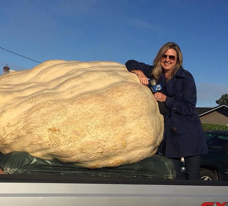 "<div class=""meta image-caption""><div class=""origin-logo origin-image none""><span>none</span></div><span class=""caption-text"">ABC7 News reporter Amy Hollyfield poses with the gourd that won the Safeway World Championship Pumpkin Weigh-Off in Half Moon Bay, Calif. on Monday, October 12, 2015. (KGO-TV)</span></div>"
