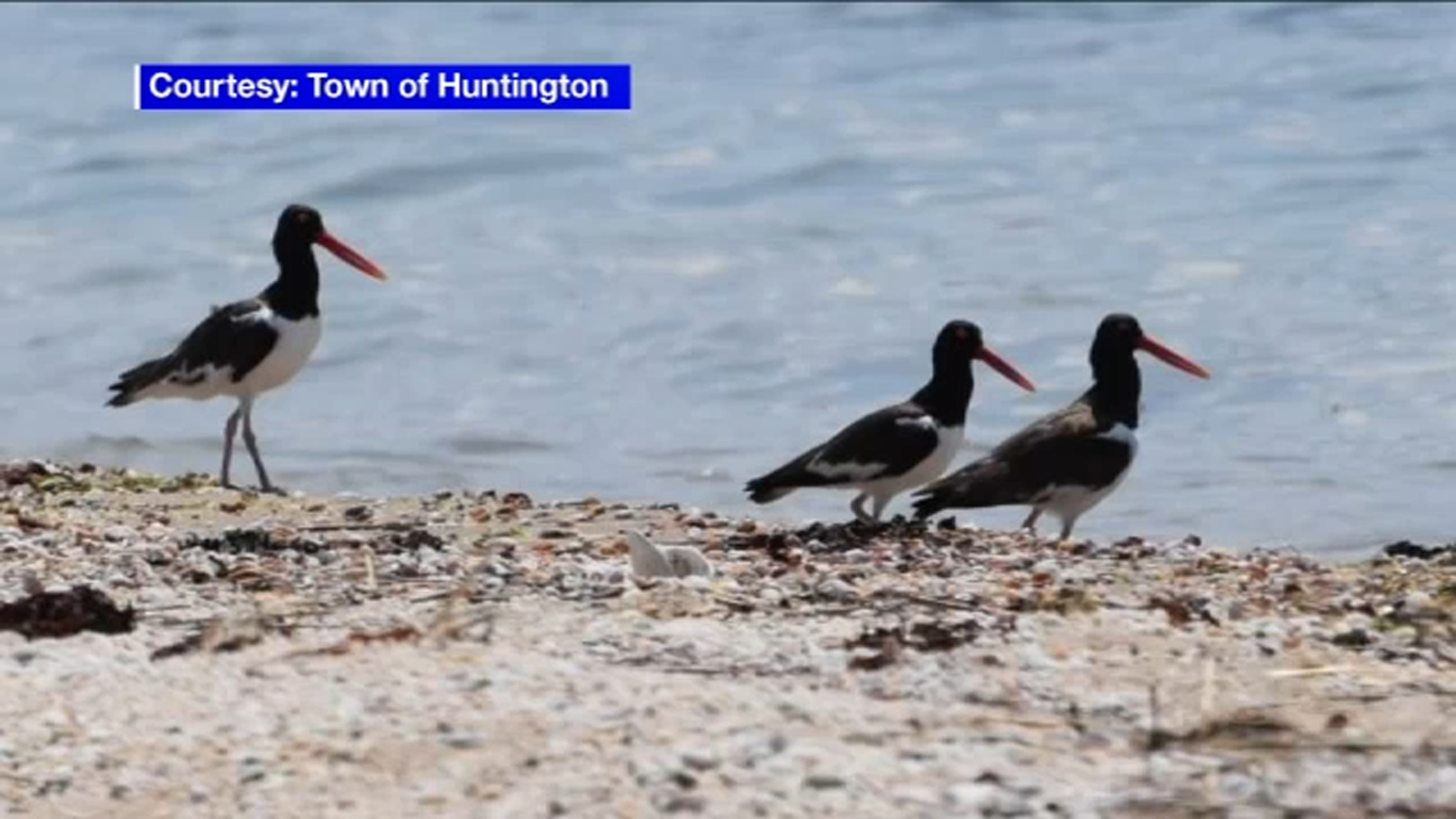 Long Island birds: Huntington closes parts of Hobart Conservatory for endangered bird species