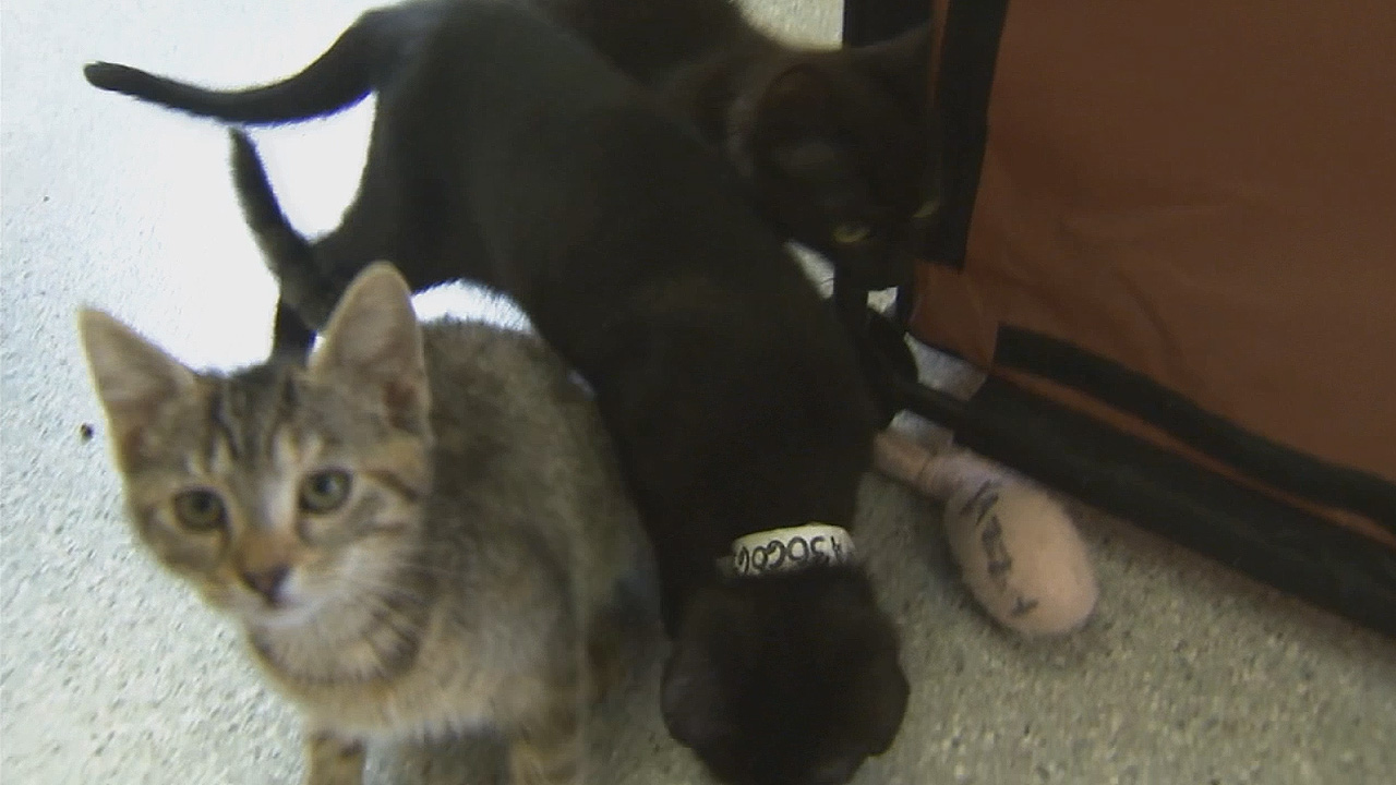 LA City Council moves closer to raising cat ownership limit from 3 to 5