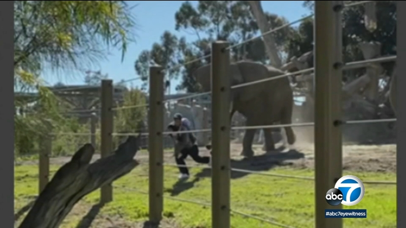 Video: Dad drops daughter during escape from charging elephant at San Diego  Zoo, man later arrested - ABC7 Los Angeles