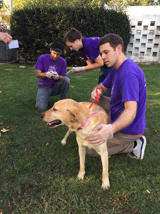 "<div class=""meta image-caption""><div class=""origin-logo origin-image none""><span>none</span></div><span class=""caption-text"">The dogs were relocated from South Carolina because of the flooding.</span></div>"