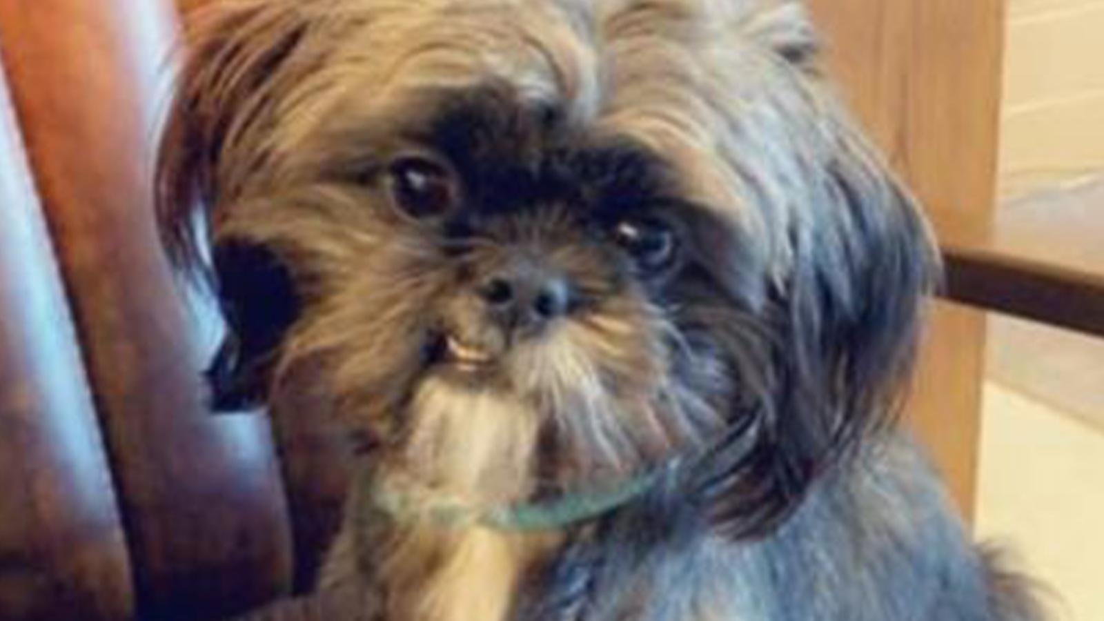 Houston woman says someone threw acid on her service dog