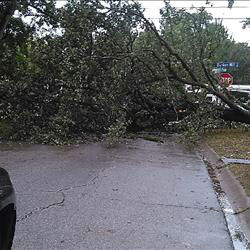"<div class=""meta image-caption""><div class=""origin-logo origin-image none""><span>none</span></div><span class=""caption-text"">A tree was knocked down due to high winds and is blocking a street in Houston area. If you have photos, email them to news@abc13.com or upload them using #abc13eyewitness</span></div>"