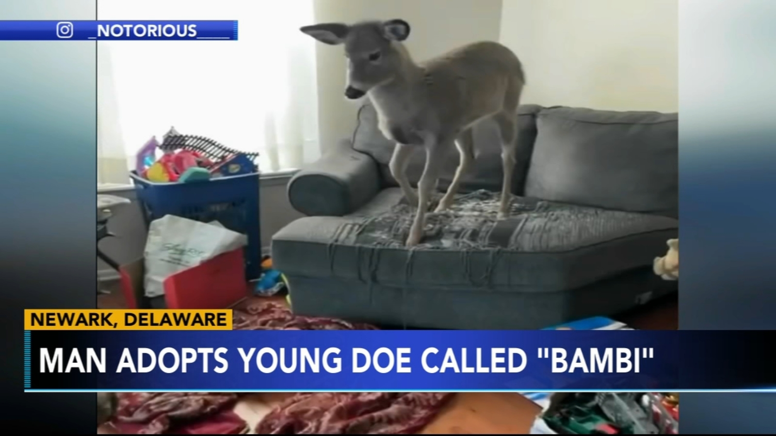 House-trained deer forms special bond with Delaware family