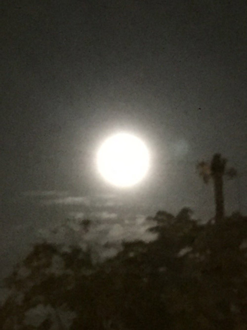 """<div class=""""meta image-caption""""><div class=""""origin-logo origin-image none""""><span>none</span></div><span class=""""caption-text"""">ABC7 viewer Arnaz Morris tweeted out a photo of the last supermoon of the year on Tuesday, Oct. 27, 2015. (twitter.com/@morrisarnaz)</span></div>"""