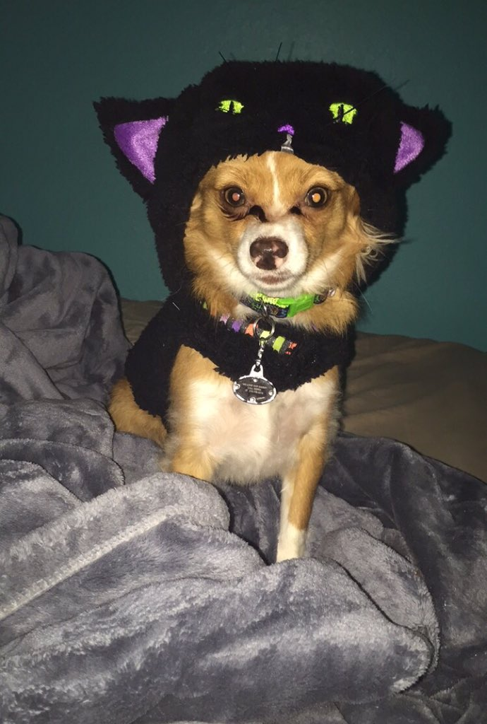 "<div class=""meta image-caption""><div class=""origin-logo origin-image none""><span>none</span></div><span class=""caption-text"">What a spooky costume for such a cute little dog! Share your photos by tagging them on social media with #SpookyOn7! (Photo submitted to KGO-TV by Sierra L/Twitter)</span></div>"