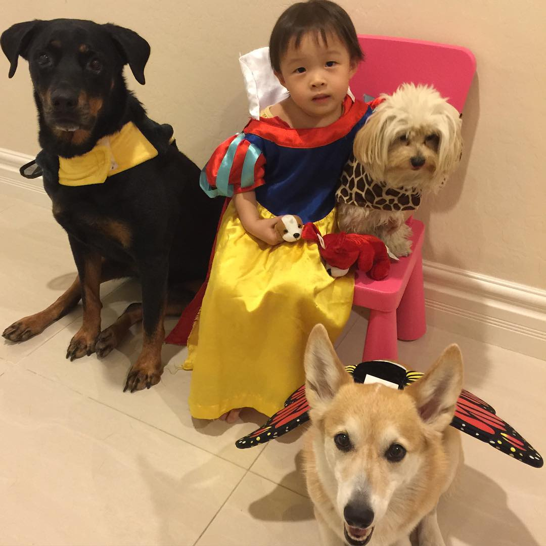 "<div class=""meta image-caption""><div class=""origin-logo origin-image none""><span>none</span></div><span class=""caption-text"">The Bay Area is getting into the spooky spirit for Halloween! Share your photos on social media by tagging them #SpookyOn7. (Photo submitted to KGO-TV by corgikikko_hunter/Instagram)</span></div>"