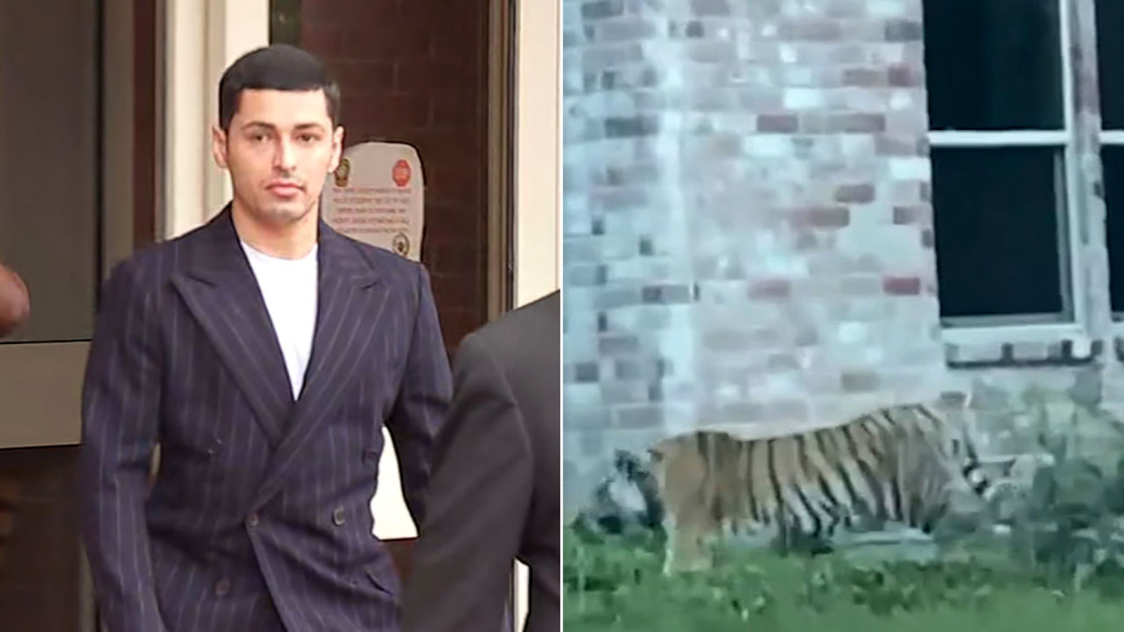 Man linked to missing Houston tiger bonds out of jail
