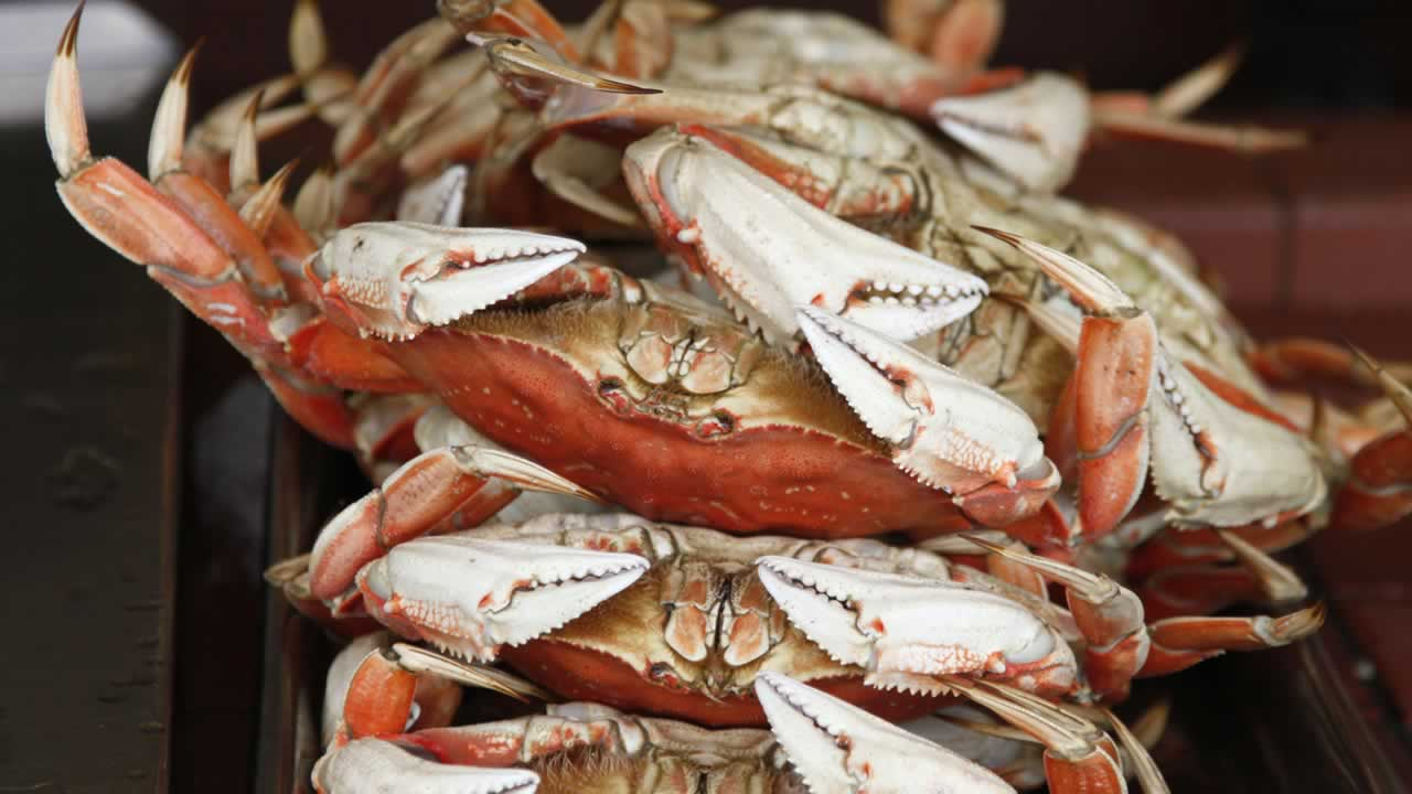 Dungeness crabs are shown for sale at Fisherman's Wharf in San Francisco, Friday, Feb. 6, 2009.
