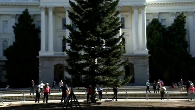 california capitol christmas tree arrives in sacramento to be lit by governor in december abc7newscom