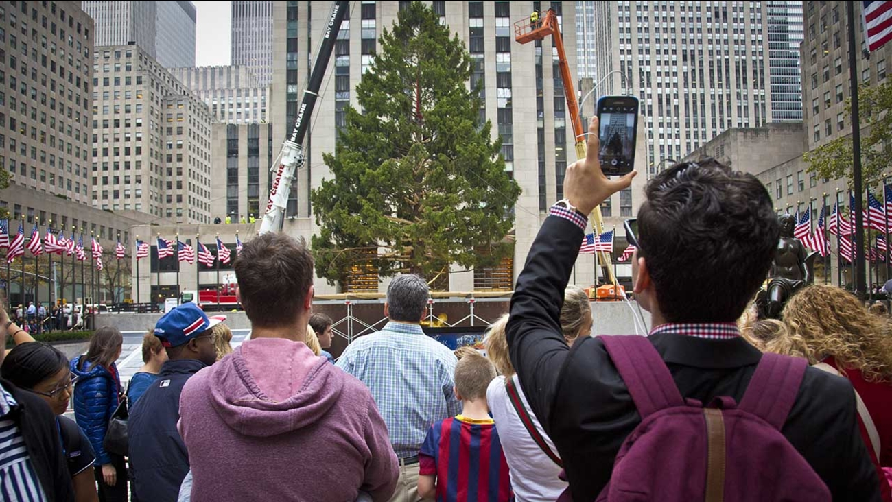 A Norway Spruce at least 75 feet high, from Gardiner, N.Y., draws attention after being placed in its new location as the 2015 Rockefeller Center Christmas tree, Nov. 6, 2015