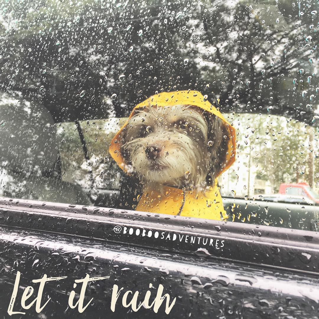 """<div class=""""meta image-caption""""><div class=""""origin-logo origin-image none""""><span>none</span></div><span class=""""caption-text"""">These little furry friend looks like he's enjoying the Bay Area rain, all snug and warm inside the car. Share your weather pics on social media using #abc7now. (Photo submitted to KGO-TV by booboosadventures/Instagram)</span></div>"""