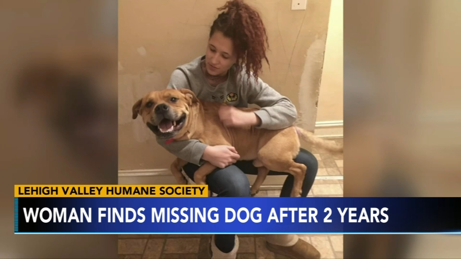 Pennsylvania woman finds missing dog while looking for new pet - 6abc Philadelphia