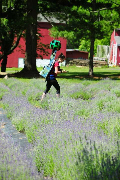 <div class='meta'><div class='origin-logo' data-origin='none'></div><span class='caption-text' data-credit='WPVI Photo'>Google Trekking at Peace Valley Lavender Farm</span></div>