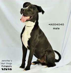 """<div class=""""meta image-caption""""><div class=""""origin-logo origin-image none""""><span>none</span></div><span class=""""caption-text"""">These dogs are up for adoption from Ft. Bend County Animal Services</span></div>"""