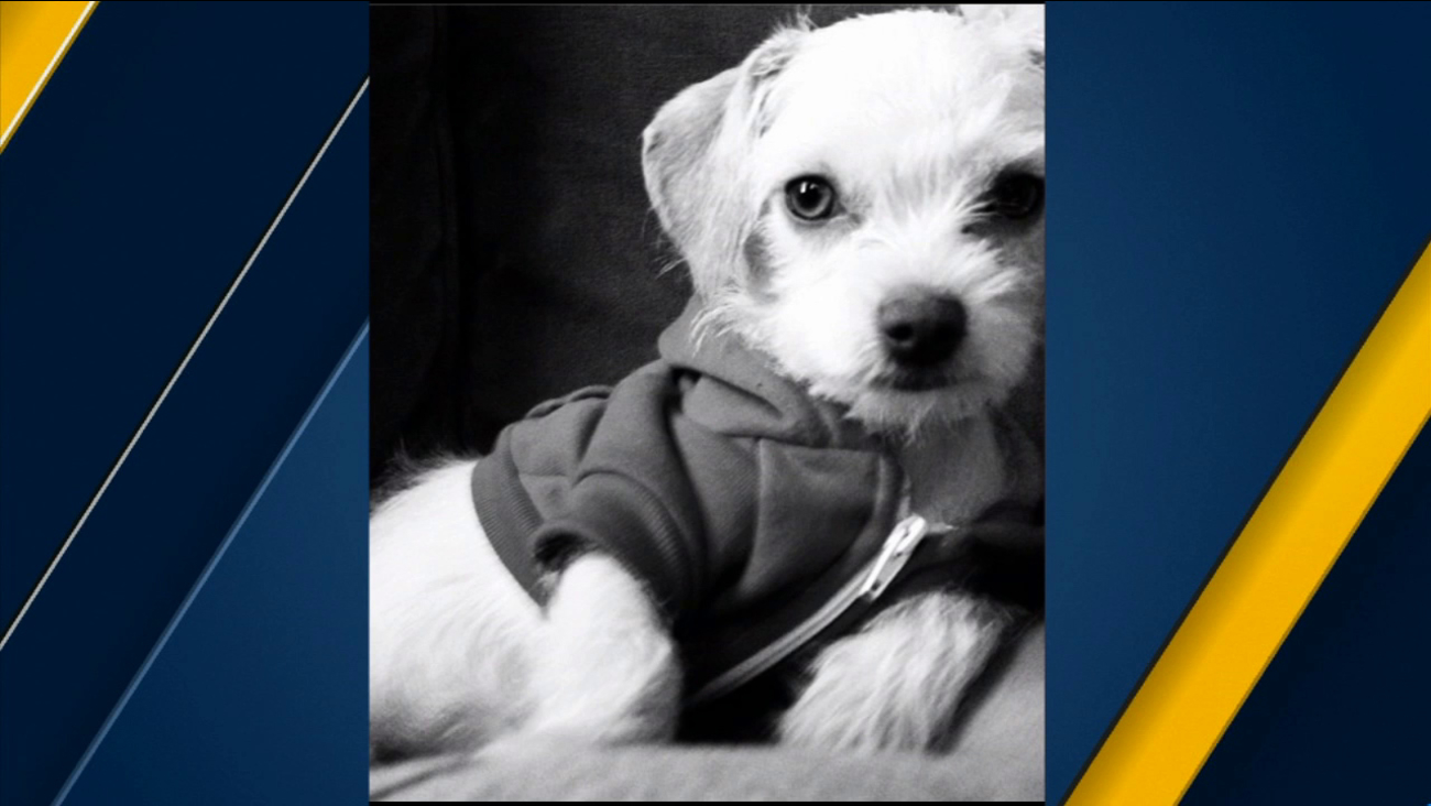 A picture of Emily Lane, Juan Cruz's dog he said was stolen in front of the W Hollywood Hotel.