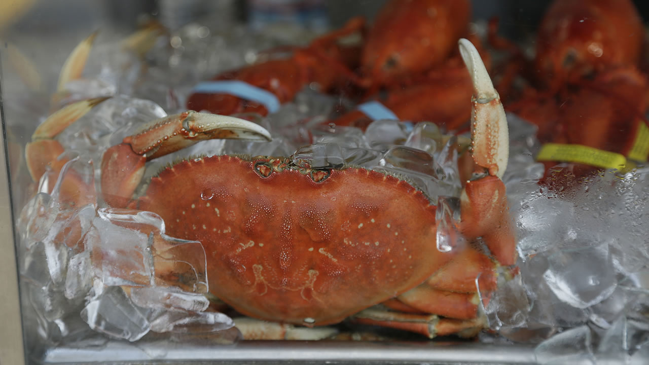 An imported Dungeness crab sits on ice for sale at Fisherman's Wharf Thursday, Nov. 5, 2015, in San Francisco.