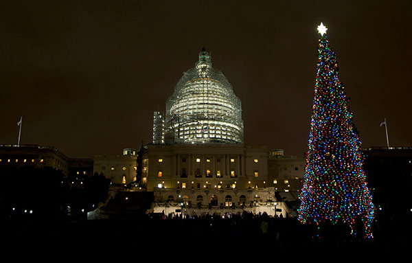 the us capitol christmas tree is lit after a ceremony on the west front of the capitol in washington wednesday dec 2 2015 - Biggest Christmas Tree