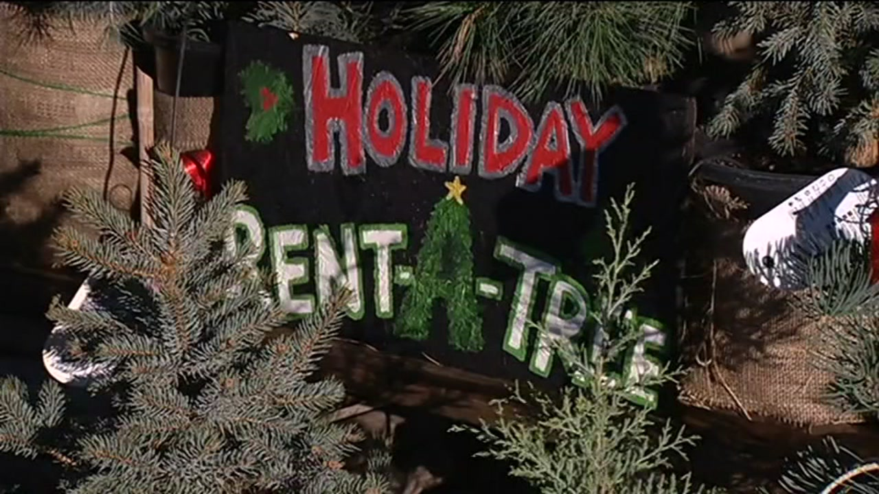 San Jose nonprofit rents out Christmas trees