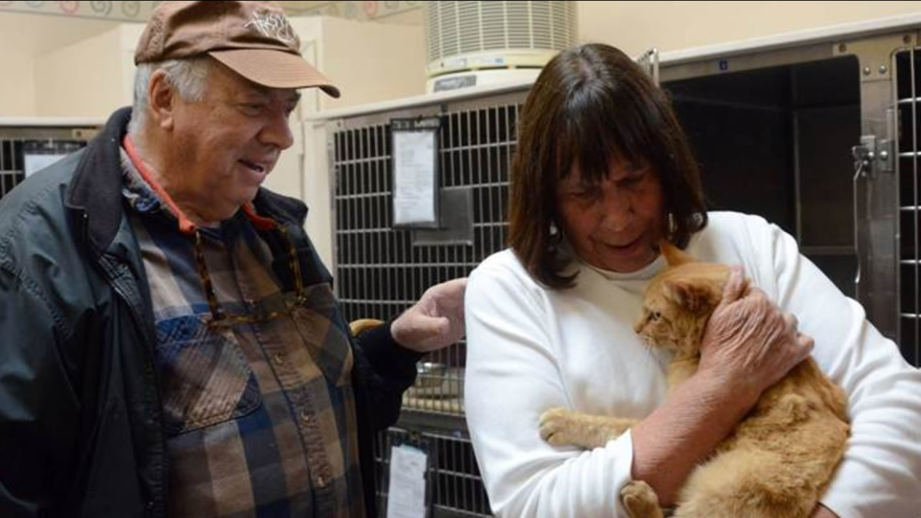Ginger the cat was reunited with her family at Marin Humane Society in Novato, Calif. on Friday, December 4, 2015.