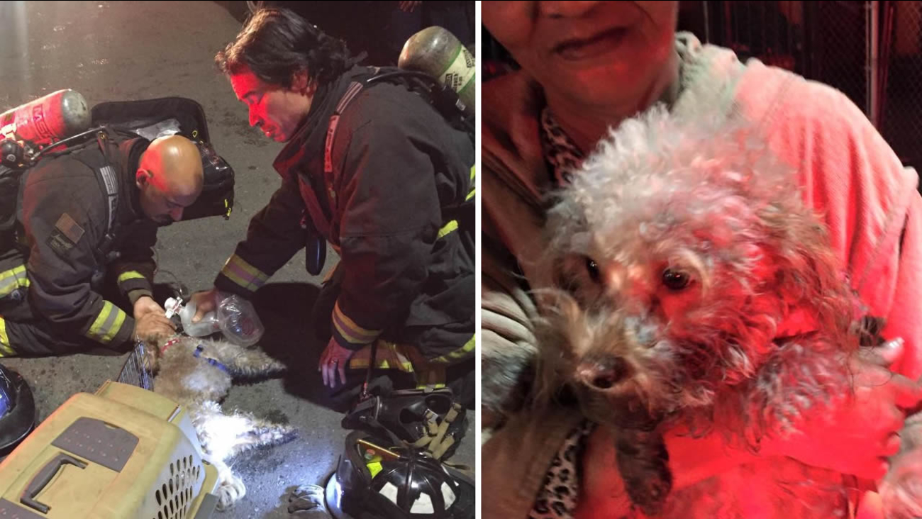 These photos show a dog firefighters resuscitated after a house fire in Oakland, Calif. on Wednesday, December 9, 2015.