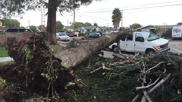 "<div class=""meta image-caption""><div class=""origin-logo origin-image none""><span>none</span></div><span class=""caption-text"">A tree fell on a fan in Hayward, Calif. during a storm on Sunday, December 13, 2015. (@svqjournalist/Twitter)</span></div>"