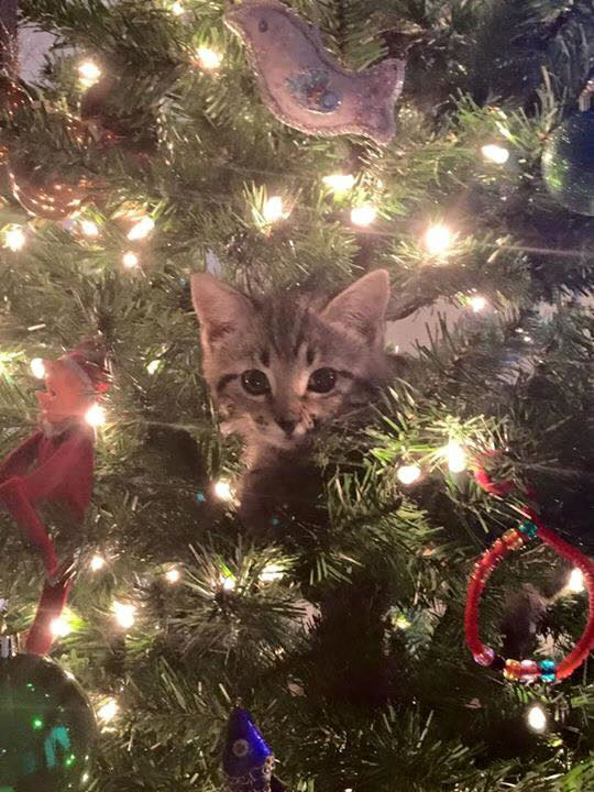 "<div class=""meta image-caption""><div class=""origin-logo origin-image none""><span>none</span></div><span class=""caption-text"">Little scout is playing in the Heitman family Christmas tree. (Photo sent to KGO-TV by Terry Heitman/Facebook)</span></div>"