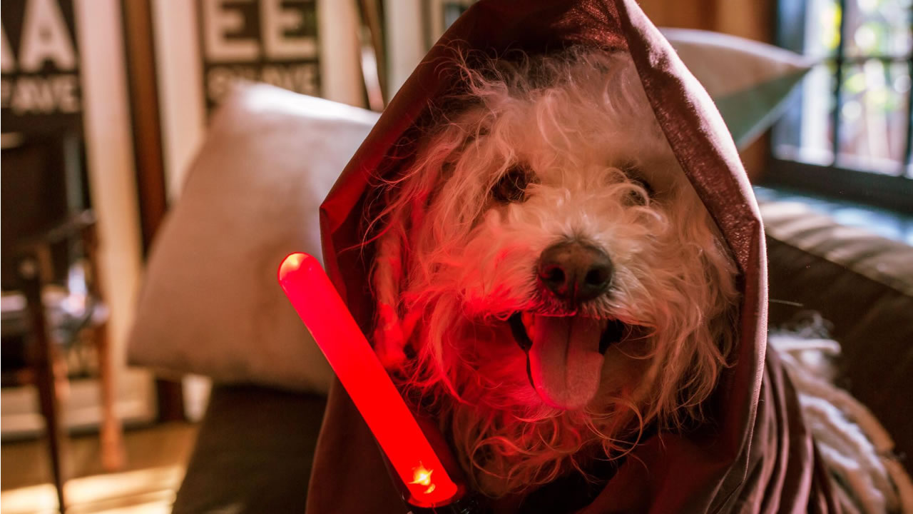 "Facebook CEO Mark Zuckerberg posted this pic of his sheepdog, Beast, dressed in ""Star Wars"" attire on Friday, December 18, 2015."