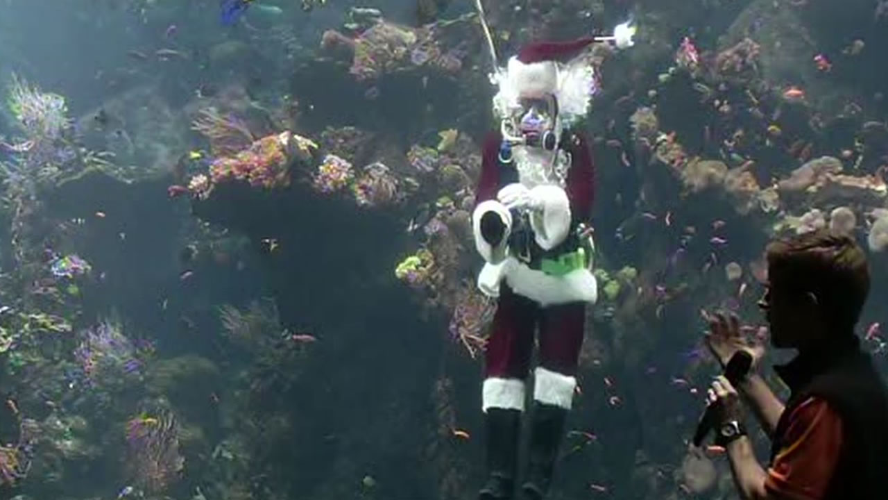 Santa Claus dove into the coral reef tank at the California Academy of Sciences in San Francisco Dec. 21, 2015.