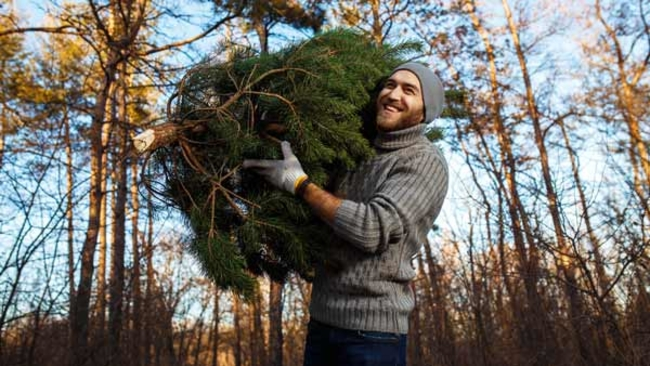 Philadelphia Streets Department announces Christmas tree recycling ...