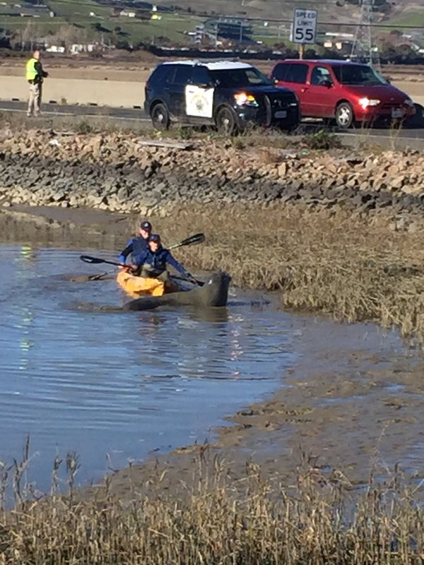 "<div class=""meta image-caption""><div class=""origin-logo origin-image none""><span>none</span></div><span class=""caption-text"">Animal rescuers worked to prevent a persistent elephant seal from crossing a Sonoma County highway on Tuesday, December 29, 2015. (KGO-TV)</span></div>"