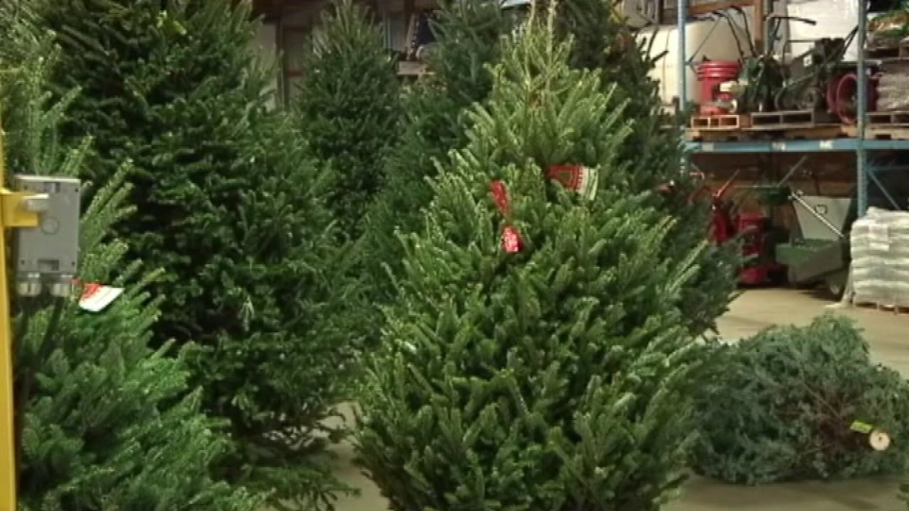 Christmas Tree Recycling Starts Jan 2 In Chicago Abc7chicago Com